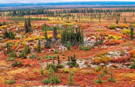 paisaje de tundra en color del