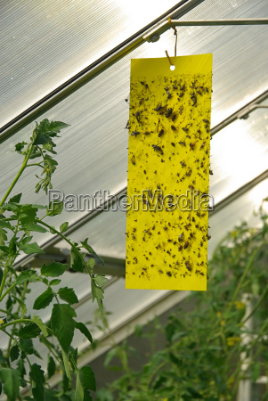 panel, amarillo, -, amarillo, barra, para - 1774813