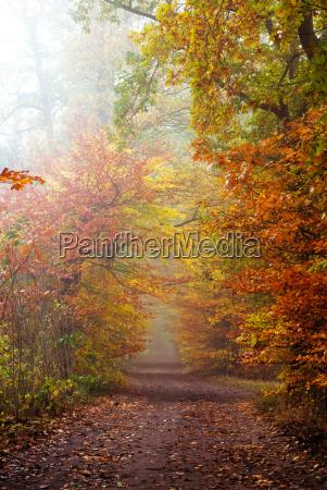 bosque de otonyo