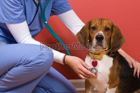 chequeo veterinario