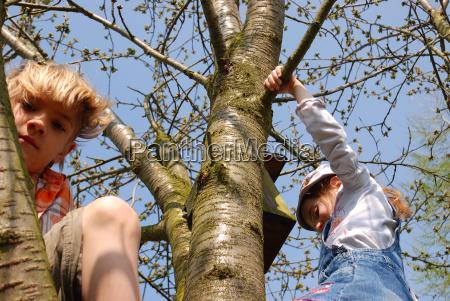 los ninyos suben al arbol