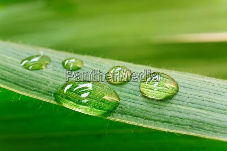 gotas de agua en hoja libre