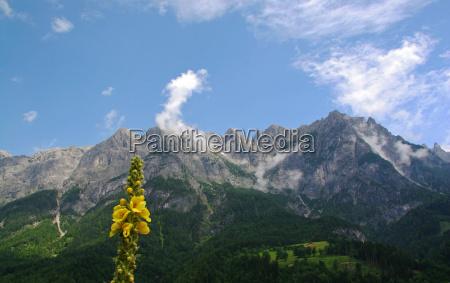 montanyas flor planta alpes naturaleza
