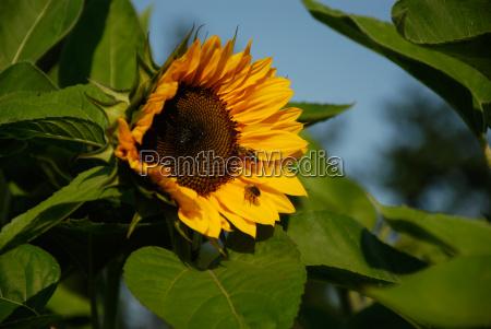 blomst plant plante mark sommer sommerlig