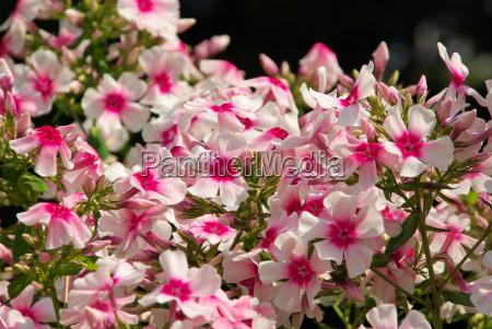 flor planta purpura