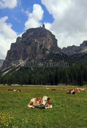alpes valle vaca manada ganado facilitar