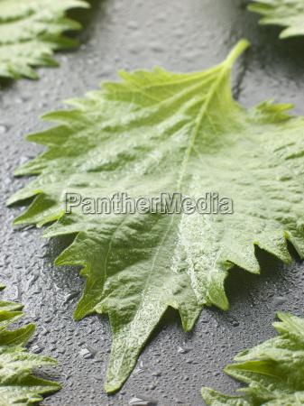 comida hoja interior hojas cocina humedo