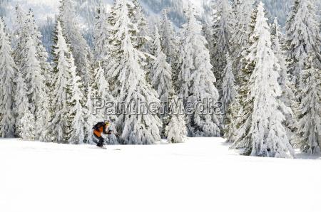 invierno deportes de invierno bosque negro