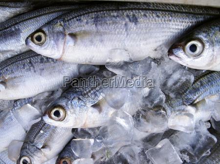 comida pescado mercado de pescado mercado