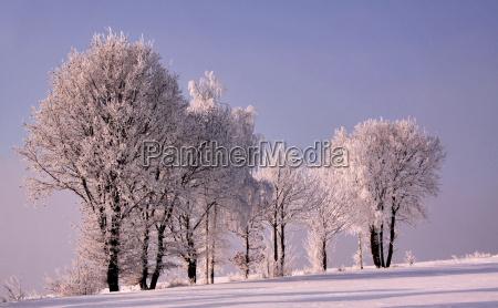 arbol arboles invierno escarcha nieve paisaje