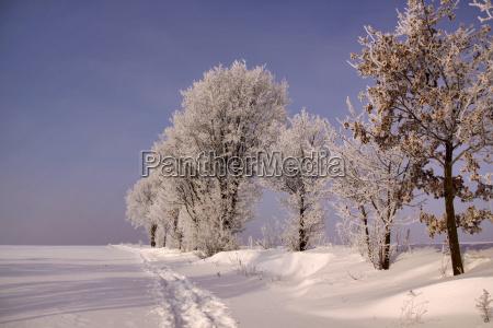 arbol arboles invierno frio maduro pista