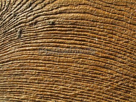 madera marron grano estructura construccion fondo