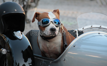 conducir reflexion perro casco collar transbordadores