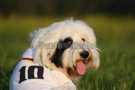 retrato perro aficionado de futbol copa