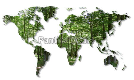 destruccion de los bosques en el