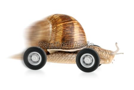 zumbando caracol en las ruedas