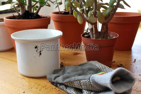 plant flowerpot gardening topsoil umtopfen umpflanzen