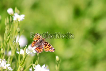insecto mariposa polilla naturaleza