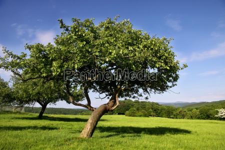 orchard en verano