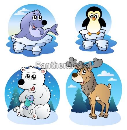 various cute winter animals