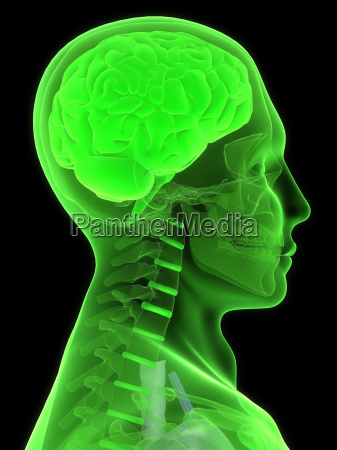 x ray head