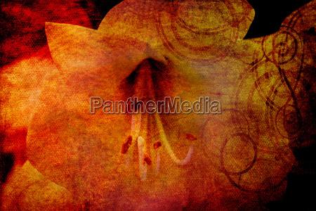 grafico flor planta pintura ilustracion magnolia
