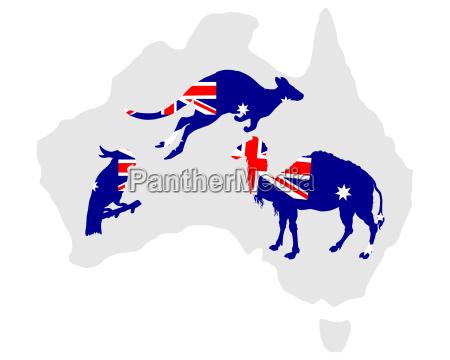 senyal azul opcional color animal pajaro