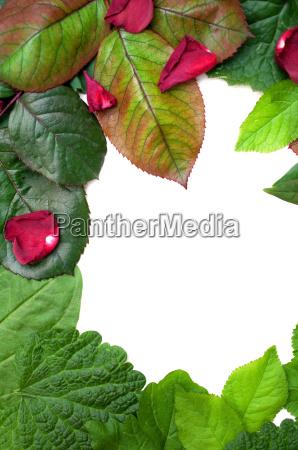 mixed leaf frame