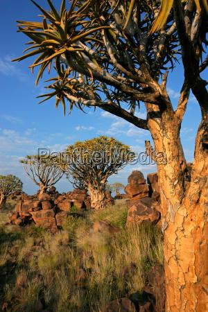 paisaje desertico con rocas de granito