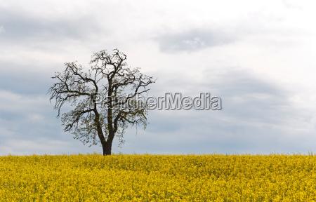 arbol flor campo cielo paisaje naturaleza