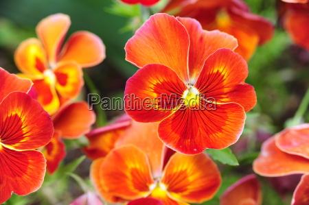 jardin flor colorido flores planta jardines