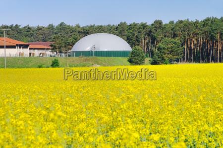 planta de biogas rapefeld campo