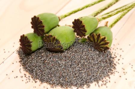 las semillas de amapola y pistas