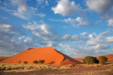 desierto namibia hierbas duna prado hierba