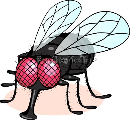 ilustracion de la mosca