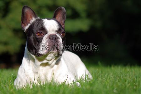 medio ambiente los animales mascotas perros