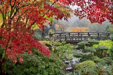 japanese maple trees by the bridge