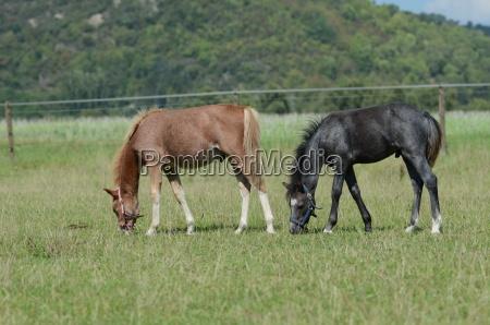 juego juega caballo potro animales infantil