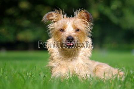 medio ambiente los animales perro perros