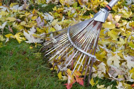 follaje de otonyo en el jardin