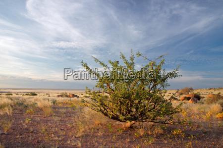 planta de desierto y el cielo