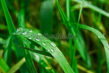 medio ambiente primer plano prado hierba