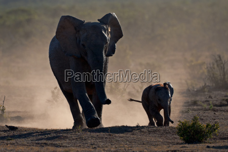 elefante polvo irrelevante diminuto altas poco