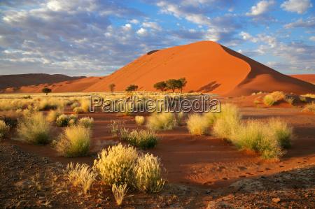 hierba dunas y cielo
