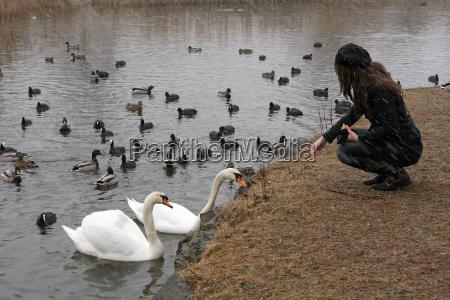 feeding animals in winter
