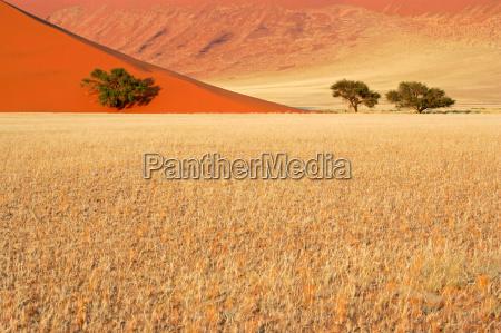 hierba dunas y arboles