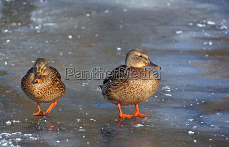 invierno pajaro frio aves hielo congelado