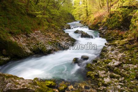 bosque cesped rio agua de agua