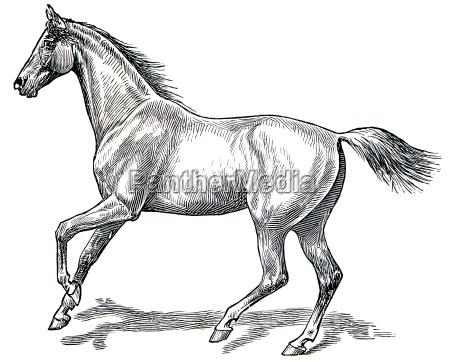 el estilo de caminar un caballo