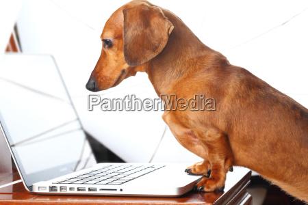 portatil computadoras computadora ordenador teclado pc